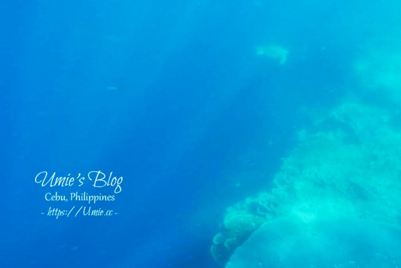 菲律賓宿霧 Day5|出海追海豚、巴里卡薩島Balicasag Island大斷層浮潛&必去的蜜蜂農場餐廳 : )
