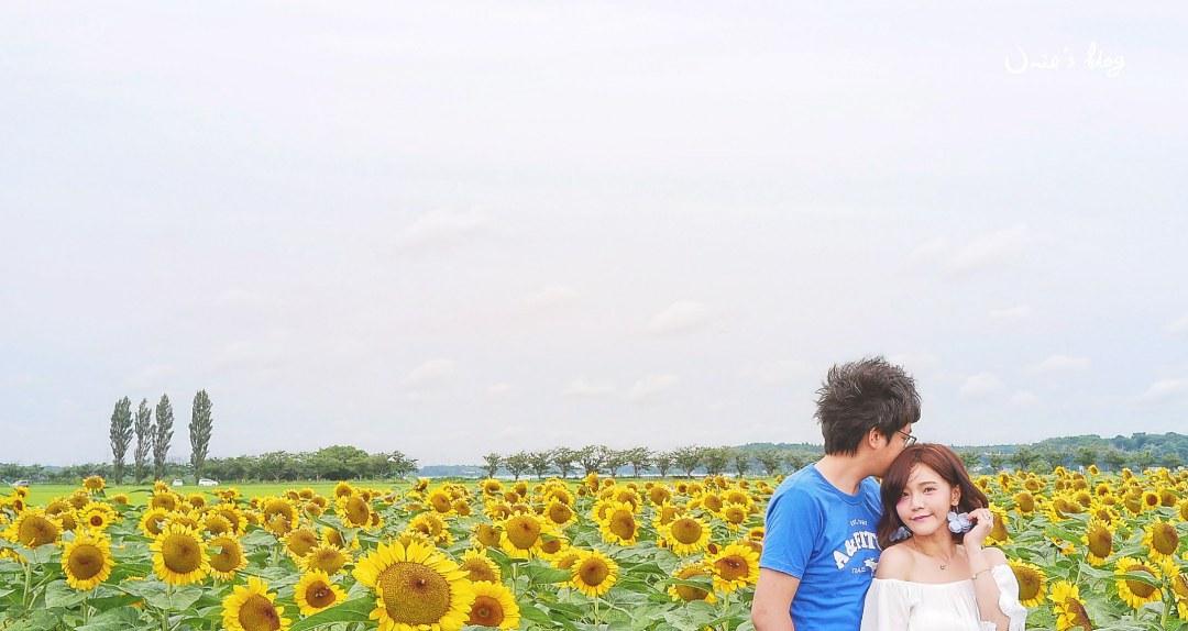 東京週邊景點推薦|日本千葉佐倉市向日葵花海在 7 月! (佐倉ふるさと広場|風車的向日葵花園)