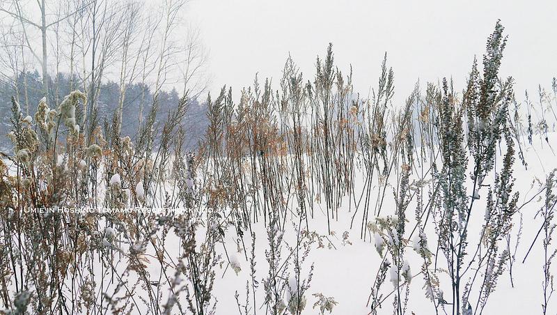 20141217 日本/北海道/星野トマム/TOMAMU/渡假村/星野渡假村/滑雪/吃到飽/buffet/umie
