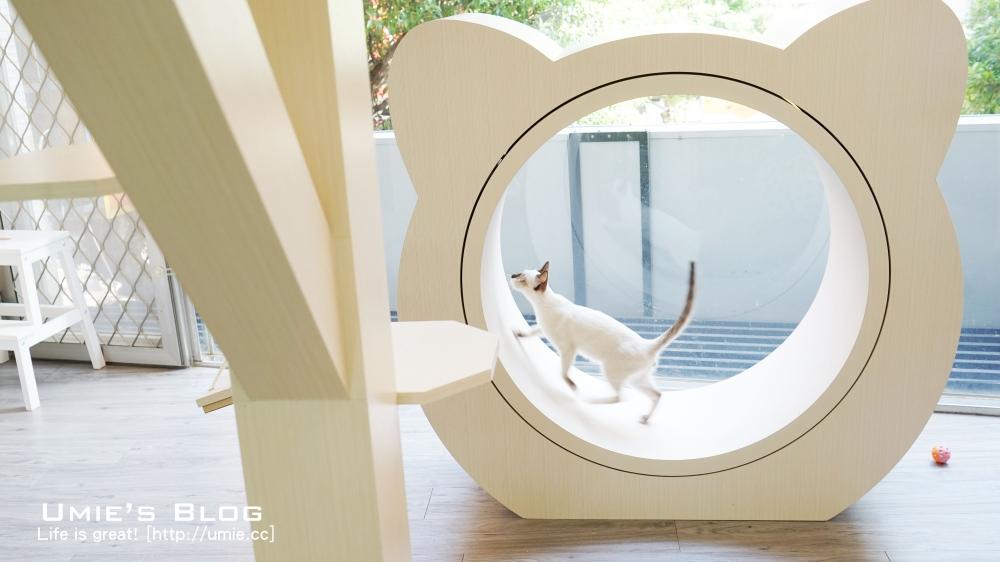 pet-hotel-catpaw810