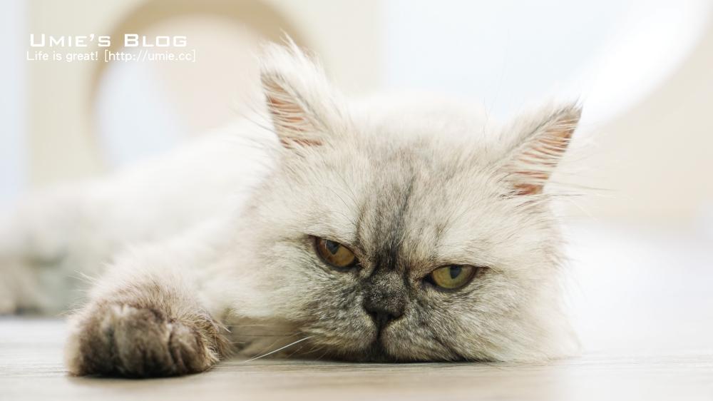 貓咪旅館,住宿安親空間!寵物旅館 [ 8號肉球貓旅 ] 給貓咪最安全舒適的住宿體驗